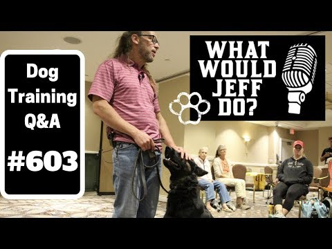 dog-training---shy-scared-dog---stop-lunging-dog---what-would-jeff-do?-q&a-ep.603-(2019)