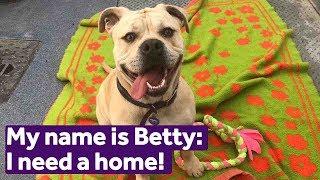 Adopt Betty   Dogs   Mayhew