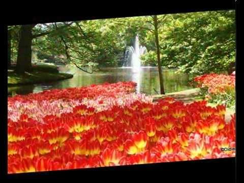 Parc floral de Keukenhof - pays Bas