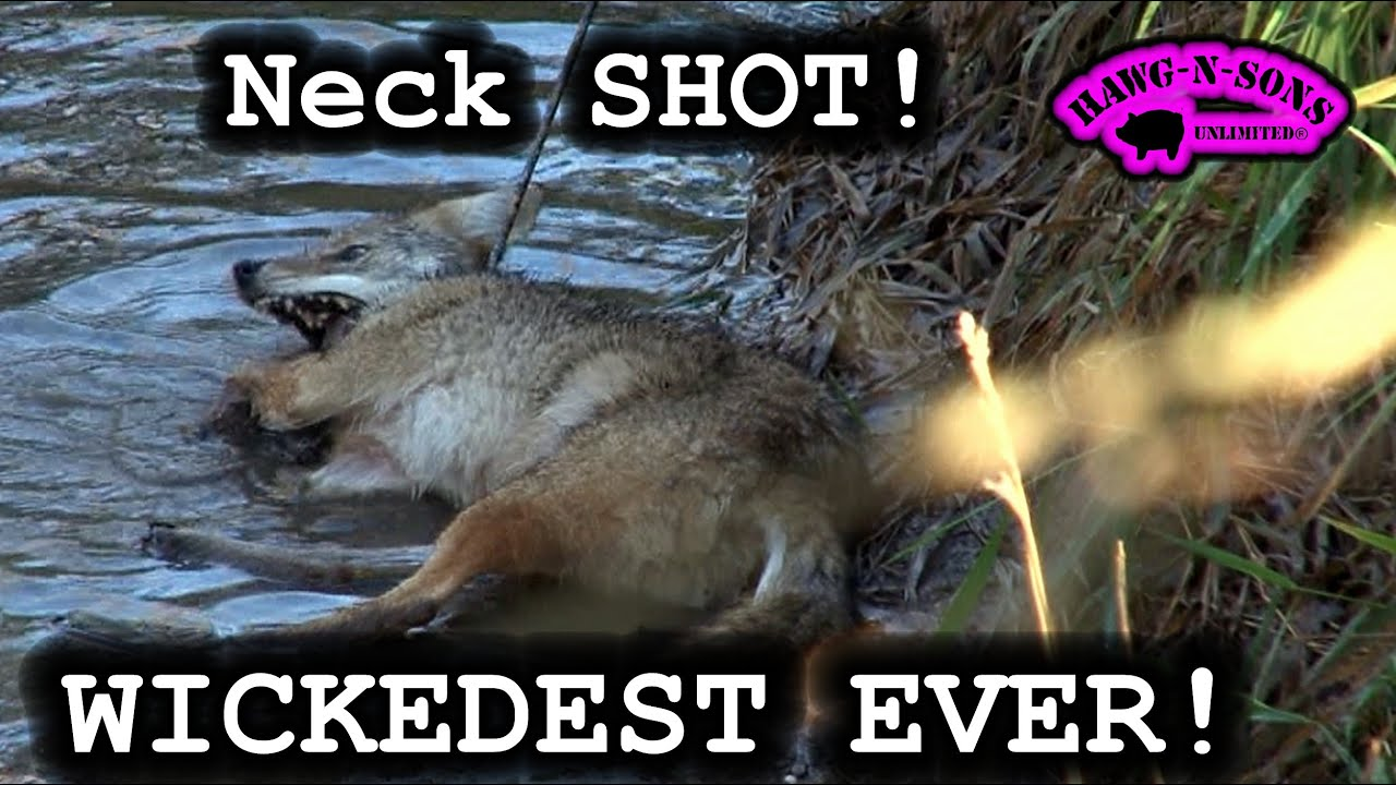 AWESOMEST Coyote NECK Shot Ever Biggest Whitetail Deer Predator ...