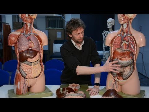 Large intestine (anatomy)