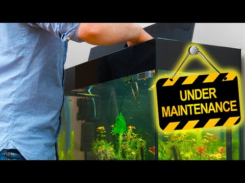 How to Start an Aquarium Maintenance Business. Fish Tank Maintenance Business