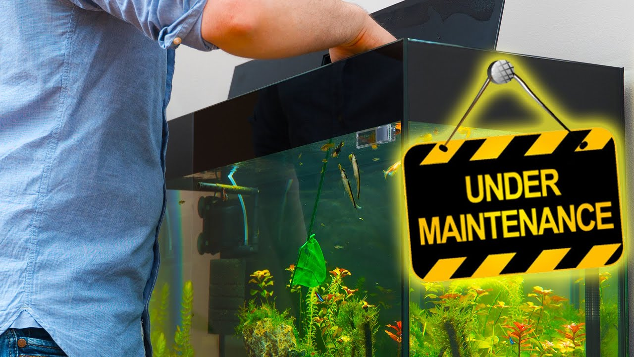 Freshwater fish tank upkeep - How To Start An Aquarium Maintenance Business Fish Tank Maintenance Business