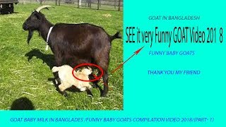 GOAT BABY milk in banglades /Funny Baby Goats Compilation video 2018/(part- 1)