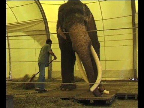 Vorschau: Colonel Joe der Elefantenbulle (Nr. 132)