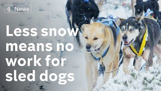 Lack of snow forces closure of Cairngorms sled-dog centre