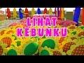 Gambar cover Lihat Kebunku | Lagu anak Indonesia terpopuler | Cilukba