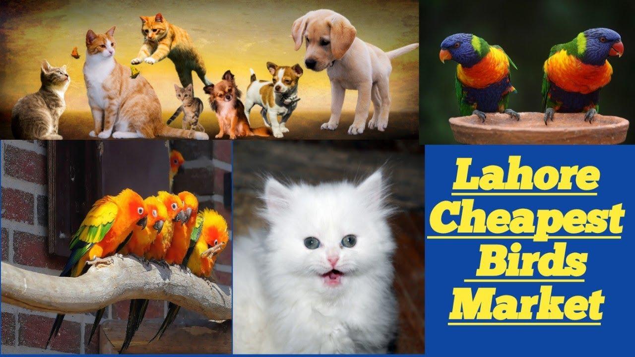 #Birds/Dogs/ #Cats #Market | Rates | Tollinton Market Lahore Pakistan Visit