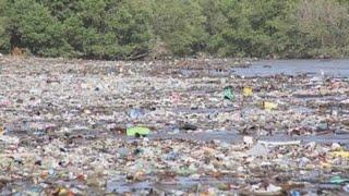 El manglar de la Bahía de Panamá, amenazado por la presión humana y el clima thumbnail