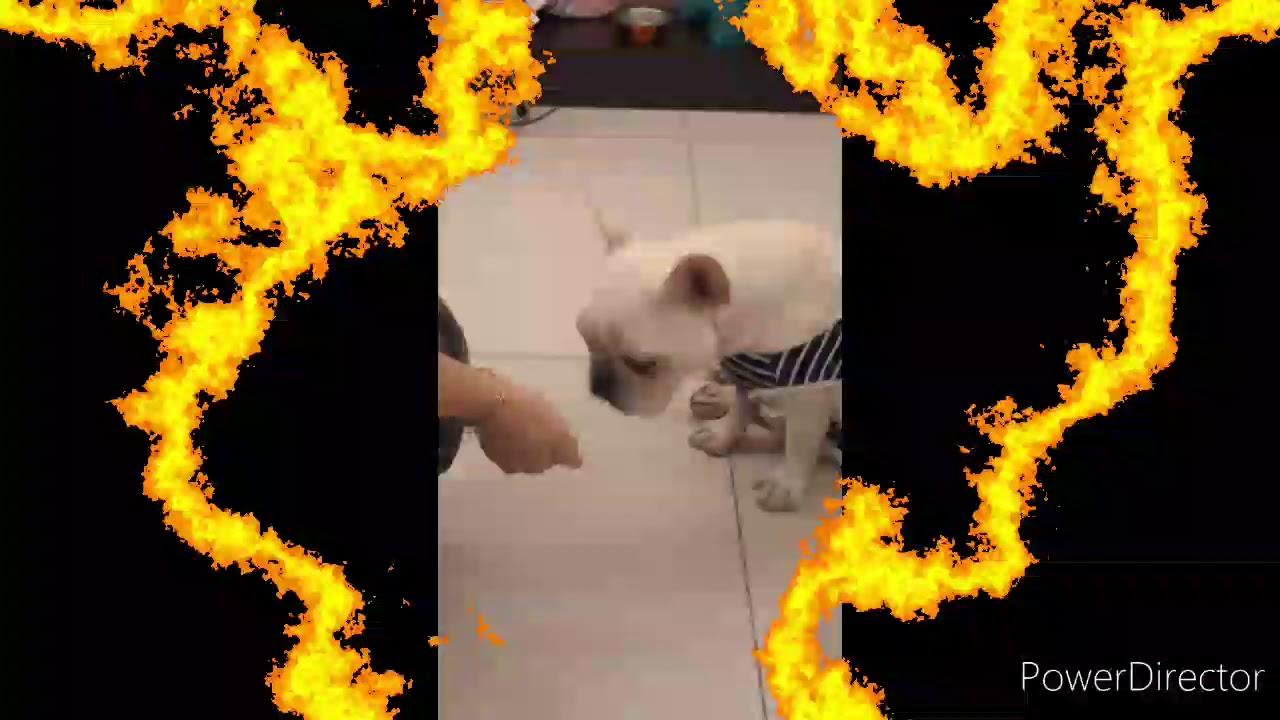 狗狗吃芭樂 - YouTube