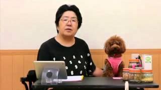 名古屋の犬のしつけマナースクール(幼稚園)代表、鈴木登子美よりご挨...