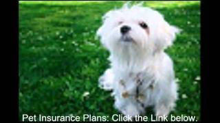 Pet Insurance Plans. $1 For First Month Special Offer!