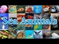 Learn Sea Animal Names and Images| Educational Video For Children