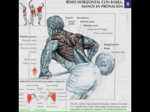 ejercicios musculacion tienda online deportes youtube