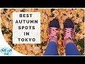 Autumn in Tokyo 2017: Best Places to Visit During Autumn 秋の東京の紅葉