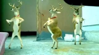 LUCU rusa dancing natal