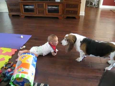Laughing Baby Chases Basset Hound