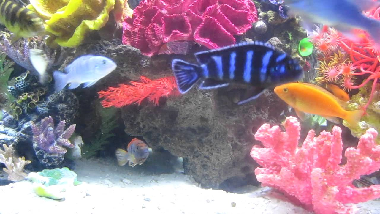 Saltwater fish tank youtube - Freshwater Reef Tank