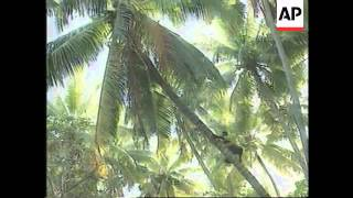 KIRIBATI ISLANDS: MILLENNIUM PREPARATIONS (2)