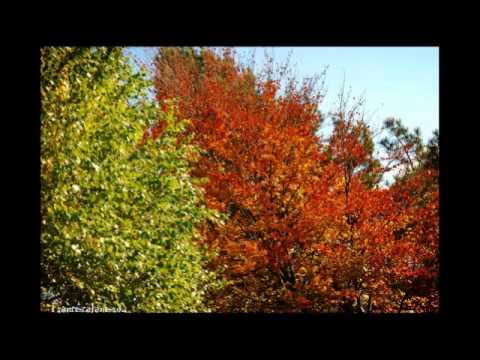 Van Morrison - Autumn Song