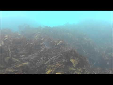 Wellington South Coast Marine Reserve 2014
