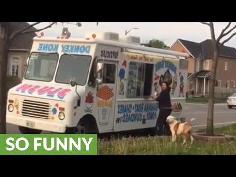 Los Anormales - Pitbull espera en linea para su helado