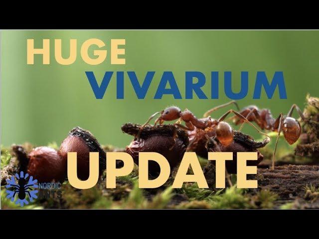 Antcolonies Update On My Big Complex Vivarium Once Again Its Happening