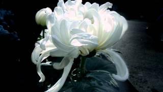Vivaldi - Salve Regina - Andreas Scholl