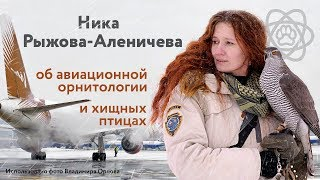 Ника Рыжова-Аленичева об авиационной орнитологии
