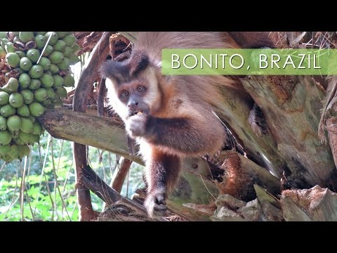 Bonito, Mother Nature's Playground - Travel Deeper Brazil (Ep. 11)