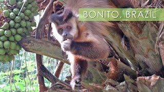 Bonito, Mother Nature's Playground – Travel Deeper Brazil (Episode 11)