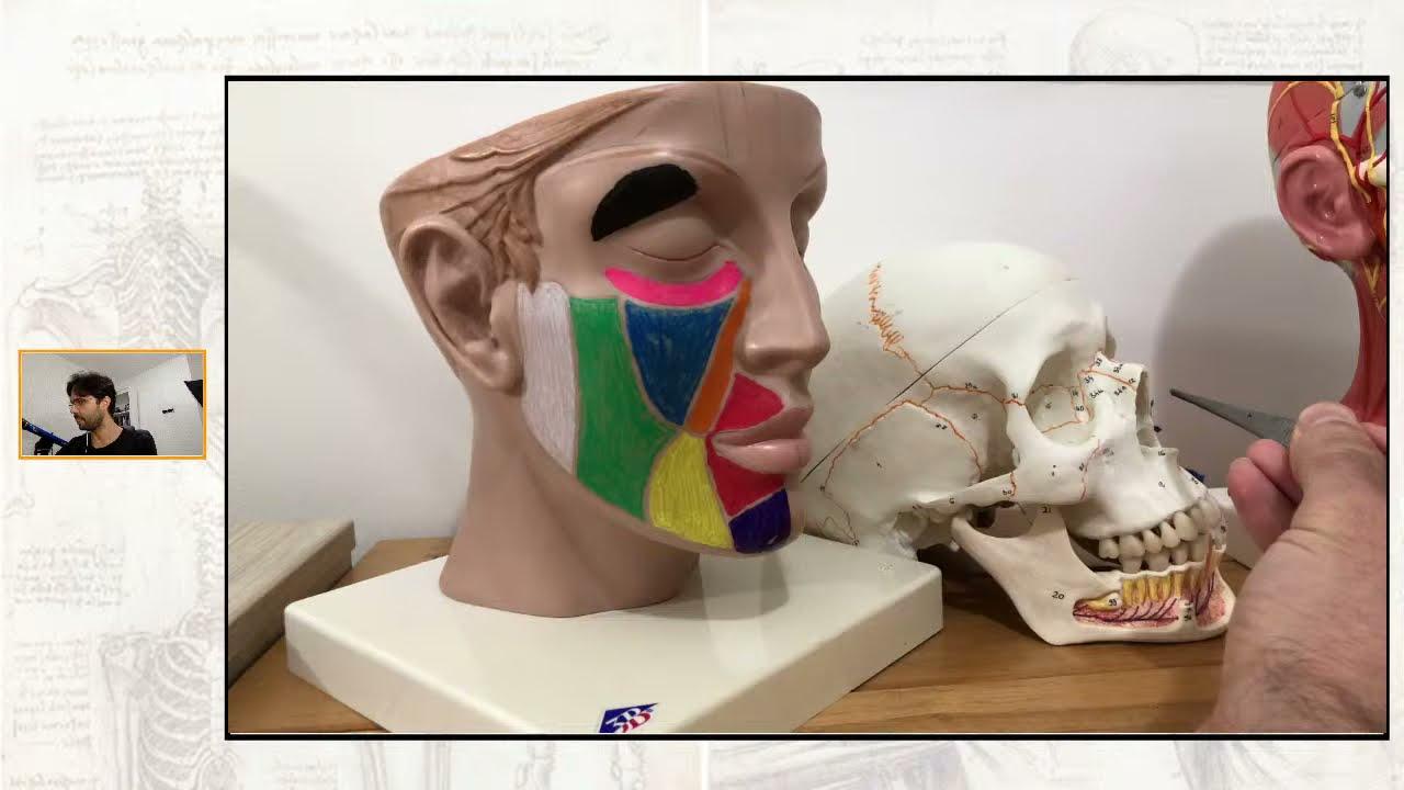 Download Anatomia do nariz parte 1 (teoria e prática) - maratona de férias