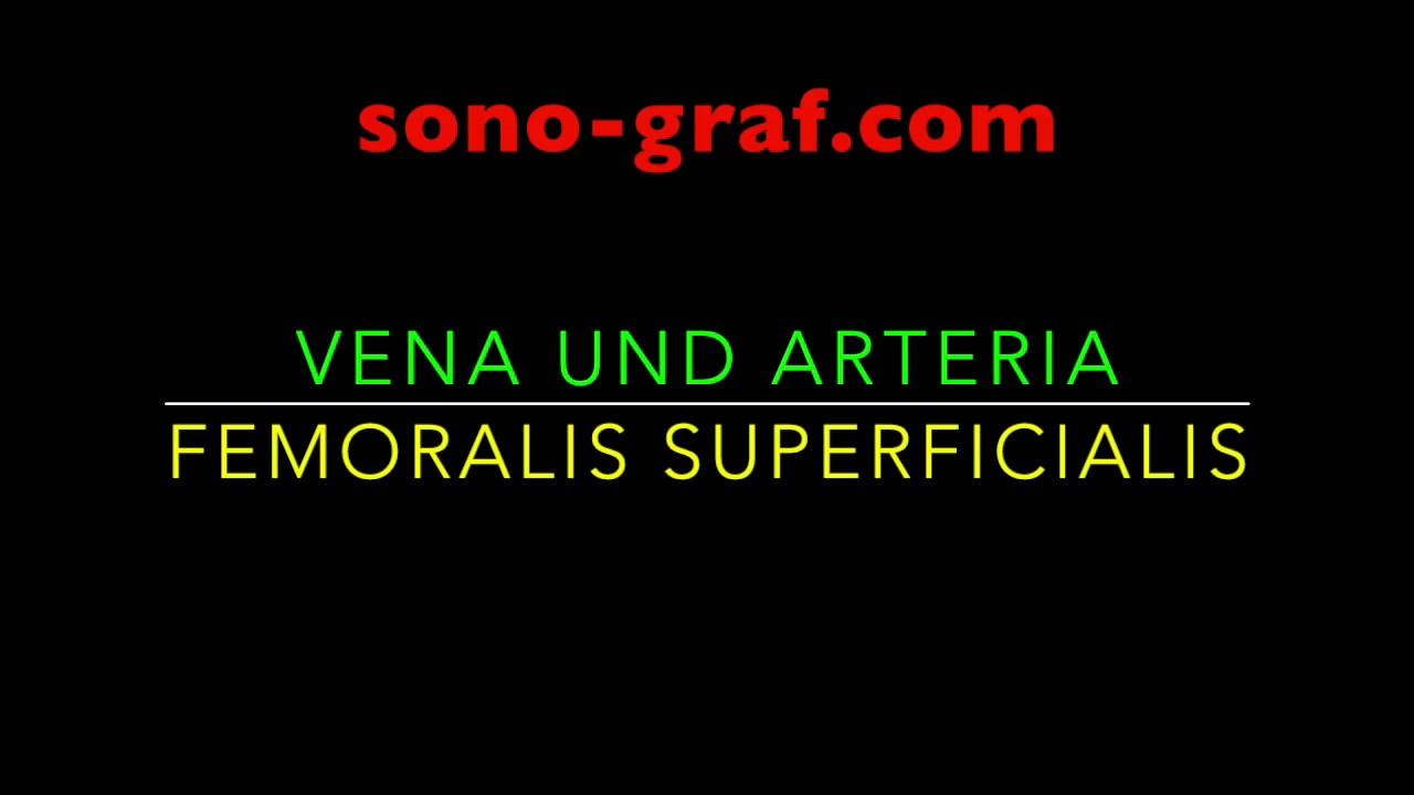 Vena und Arteria femoralis superficialis - sono-graf.com - YouTube