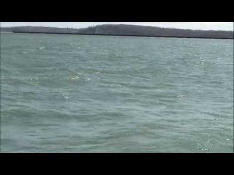 Brown trout fishing on lake Ontario, with Capt. Brian Edwards of Fatal Attraction Charters.