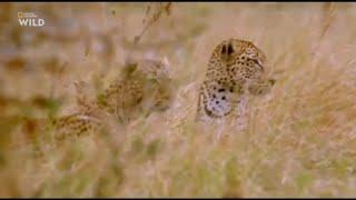 National Geographic WILD. Первозданная природа. Нгоронгоро - африканская колыбель жизни.