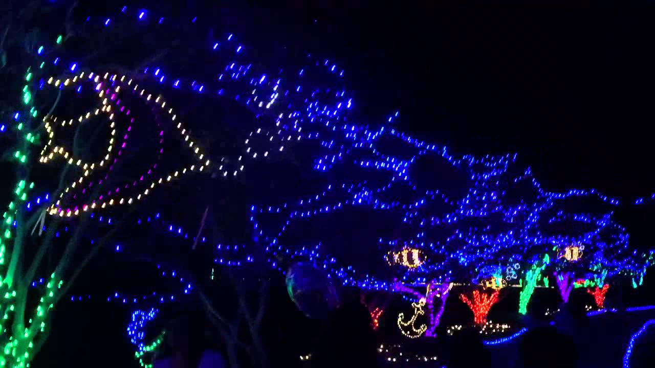 Walking Through The Lights At The Norfolk Botanical Gardens Youtube