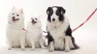 犬と家族が一緒に写真を撮影できる写真館。 ペットと写真撮影ならおまか...