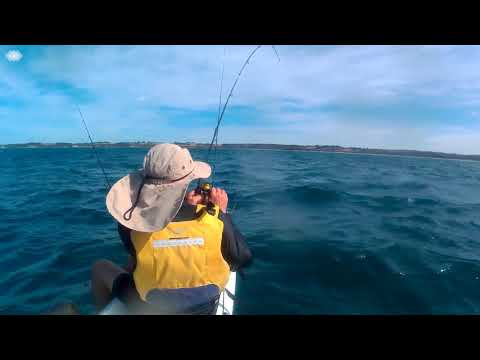 Bronze Whaler and Snapper off Flat Rocks