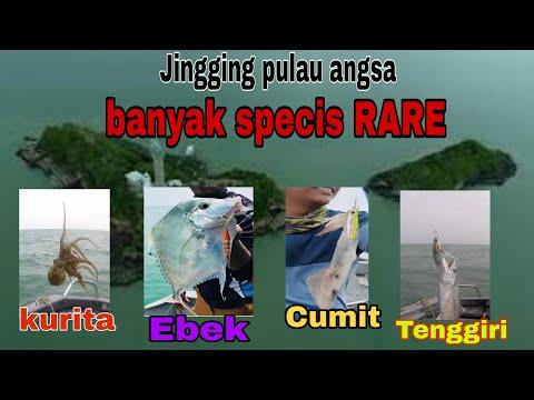 Jingging Micro Jig At Pulau Angsa...I Have Unlock New Species At Here...
