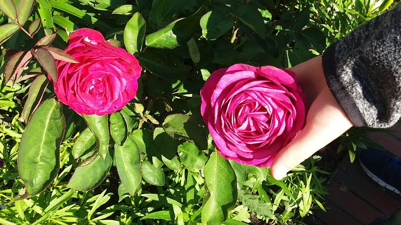 Цветы моего брата и его жены.Святая Троица.