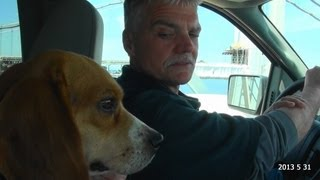 Skyview's Beagles Trip To New Jersey Delaware Gun Dog Brace Trial June 1st & 2nd. 2013