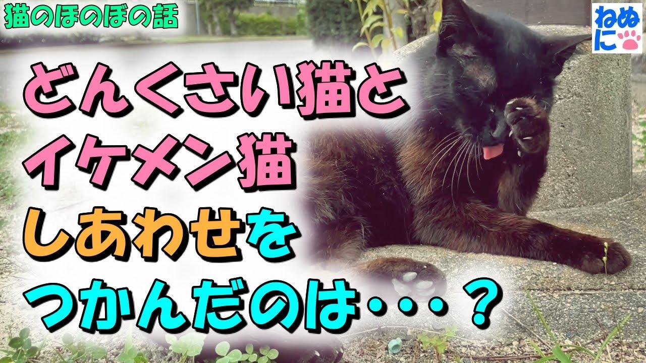 【猫のほのぼの話】どんくさい猫とイケメン猫、しあわせをつかんだのは・・・?