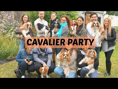 Cavalier King Charles Spaniel dog puppy Party | October 2016 | Montreal
