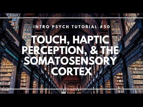 Touch, Haptic Perception, & the Somatosensory Cortex (Intro Psych Tutorial #50)