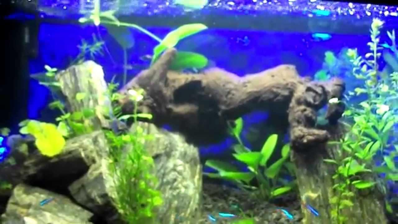 Akwarystyka 2 Prezentacja Akwarium Dodatkowe Oświetlenie Led