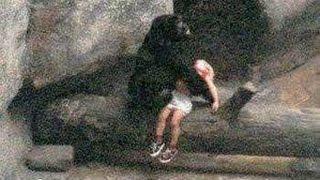 【奇跡動画】ゴリラが人間の子供を助けた! 動物にも優しさがあるのかも...