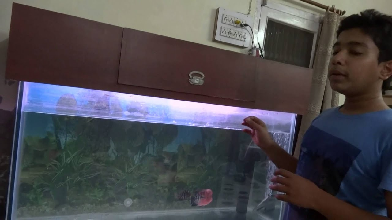 how to set up new aquarium on ecosmart live