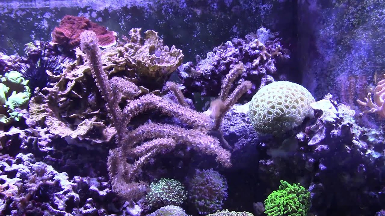 Keeping synthetic Gorgonians