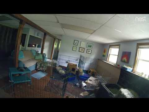 Westhampton police release surveillance video of break-in suspect inside Route 66 home