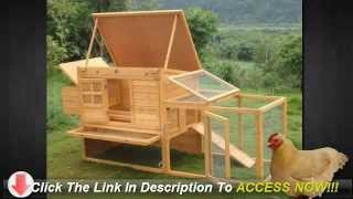 How To Build A Chicken Coop In Your Backyard